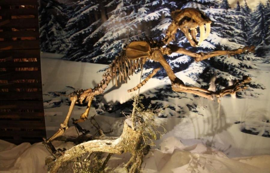 dinopetrea-alcala-henares-4